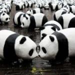 Znane i mniej znane międzynarodowe organizacje ekologiczne zajmujące się ochroną środowiska