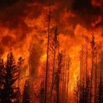 Co roku w Polsce lasy płoną 10 000 razy. Prawie wszystkie pożary powodują ludzie.