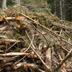 Depositphotos / @ Oregon Department of Forestry / CC BY 2.0