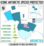U wybrzeży Antarktydy powstanie największy na świecie rezerwat morski- wlaczoszczedzanie.pl