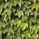 Rośliny doniczkowe oczyszczające powietrze w domu