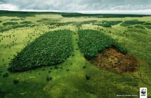 Według raportu WWF ponad połowa obszarów przyrodniczych w UE chroniona jest tylko na papierze - wlaczoszczedzanie.pl - Fickr /@ brett jordan / CC BY 2.0