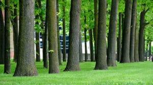 Prezydent podpisał nowelizację ustawy o ochronie przyrody w sprawie wycinki drzew - wlaczoszczedzanie.pl - Flickr / @ RichardBH / CC BY 2.0