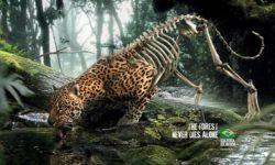 kampania Las nigdy nie umiera samotnie The Forest Never Dies Alone - wlaczoszczedzanie.pl