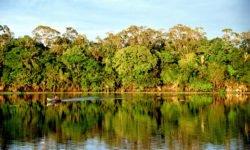 Firma Whirlpool w ramach projektu LifeGate staje w obronie lasów deszczowych Amazonii - wlaczoszczedzanie.pl - Flickr / @ Andre Deak / CC0 1.0