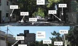 Drzewa ograniczają smog, obniżają temperaturę w miastach w czasie upałów, zmniejszają zużycie energii - wlaczoszczedzanie.pl