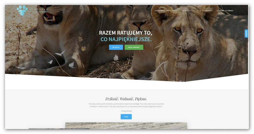 Fundacja Ocalmy Dzikość pierwszą polską organizacją która podjęła się ochrony lwów zachodnioafrykańskich