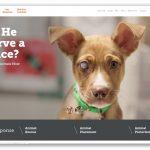 Amerykańskie Towarzystwo Zapobiegania Okrucieństwu wobec Zwierząt -The American Society for the Prevention of Cruelty to Animals (ASPCA)