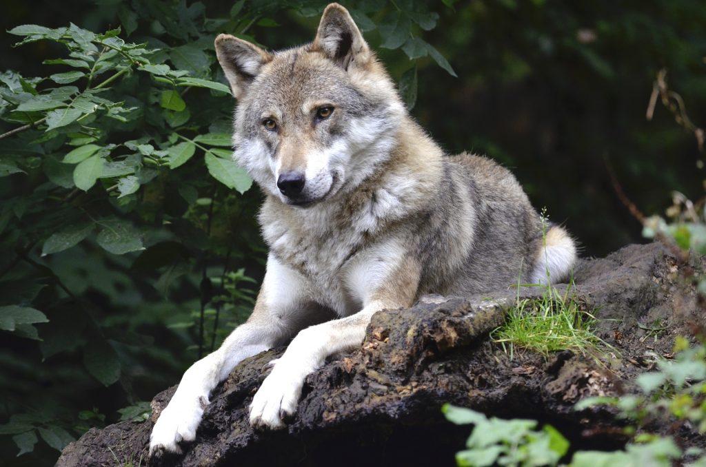 Konflikty człowieka z dużymi gatunkami zwierząt mają miejsce, ale można starać się je łagodzić