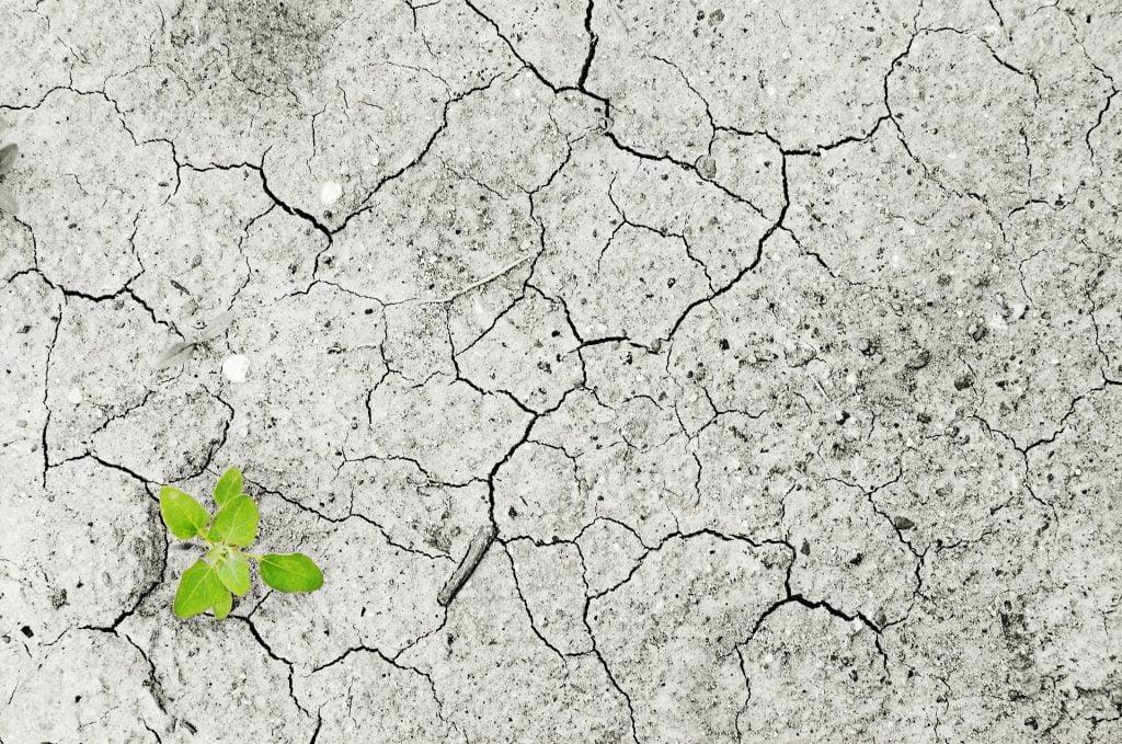 W Polsce coraz częściej odczuwamy negatywny wpływ zmian klimatu na nasze zdrowie