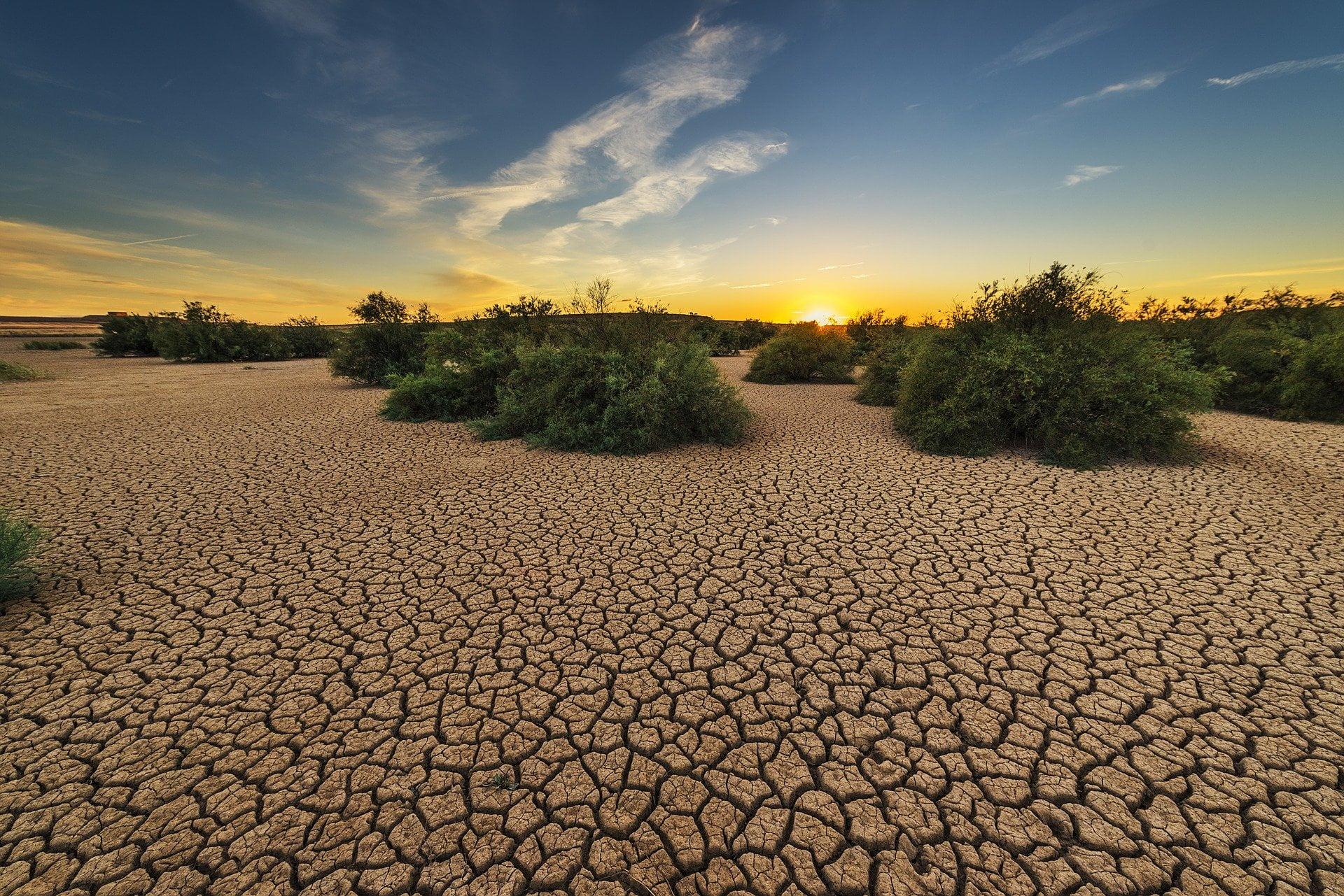 Eksperci przestrzegają przed największą suszą od dziesiątków lat