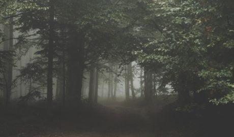 Zwarte korony drzew chronią runo leśne przed zmianami klimatu