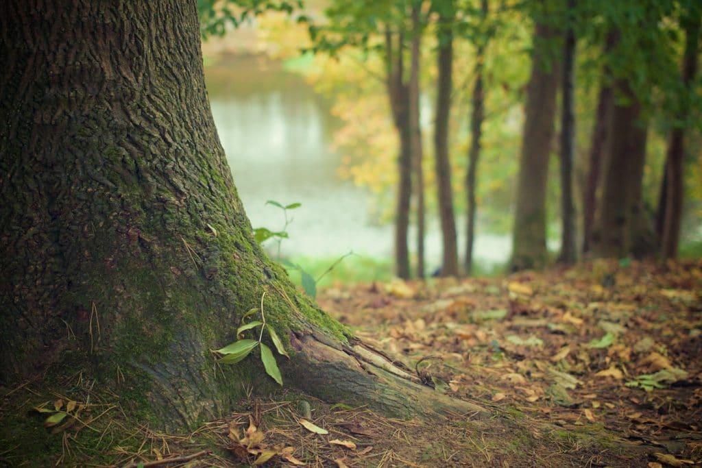 Jeśli chcemy chronić europejskie lasy powinniśmy wspierać ich otoczenie i naturalne procesy regeneracji