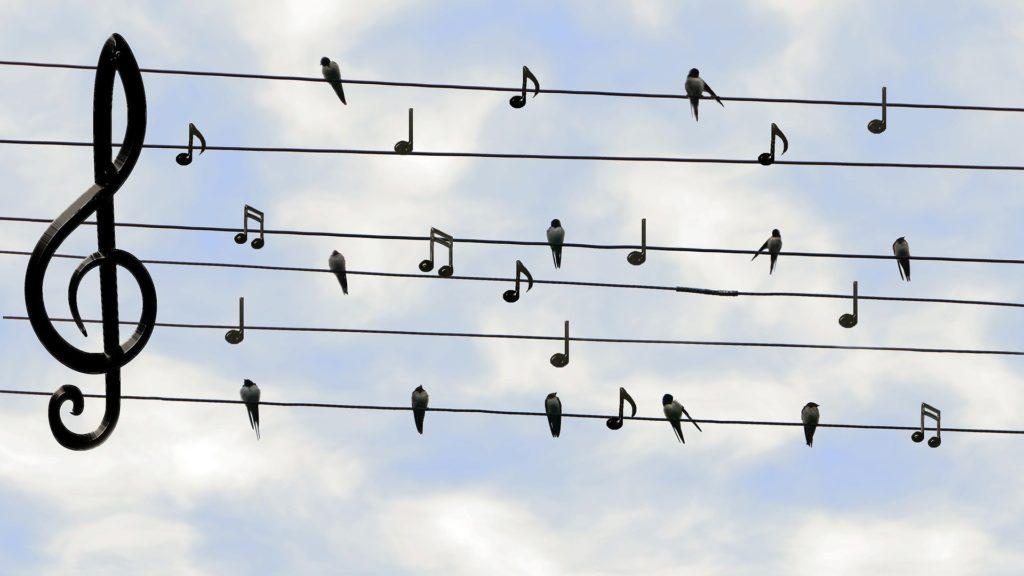 Co ptaki robią w czasie wakacji?