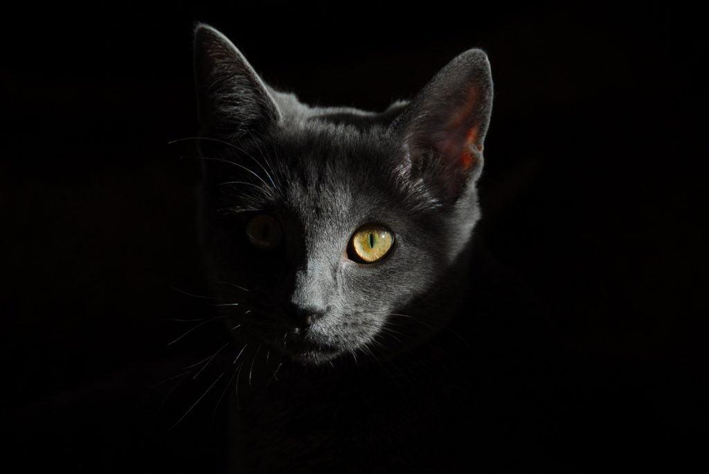 Prawdopodobnie już 6 tys. lat temu koty wspierały rolników w walce z gryzoniami