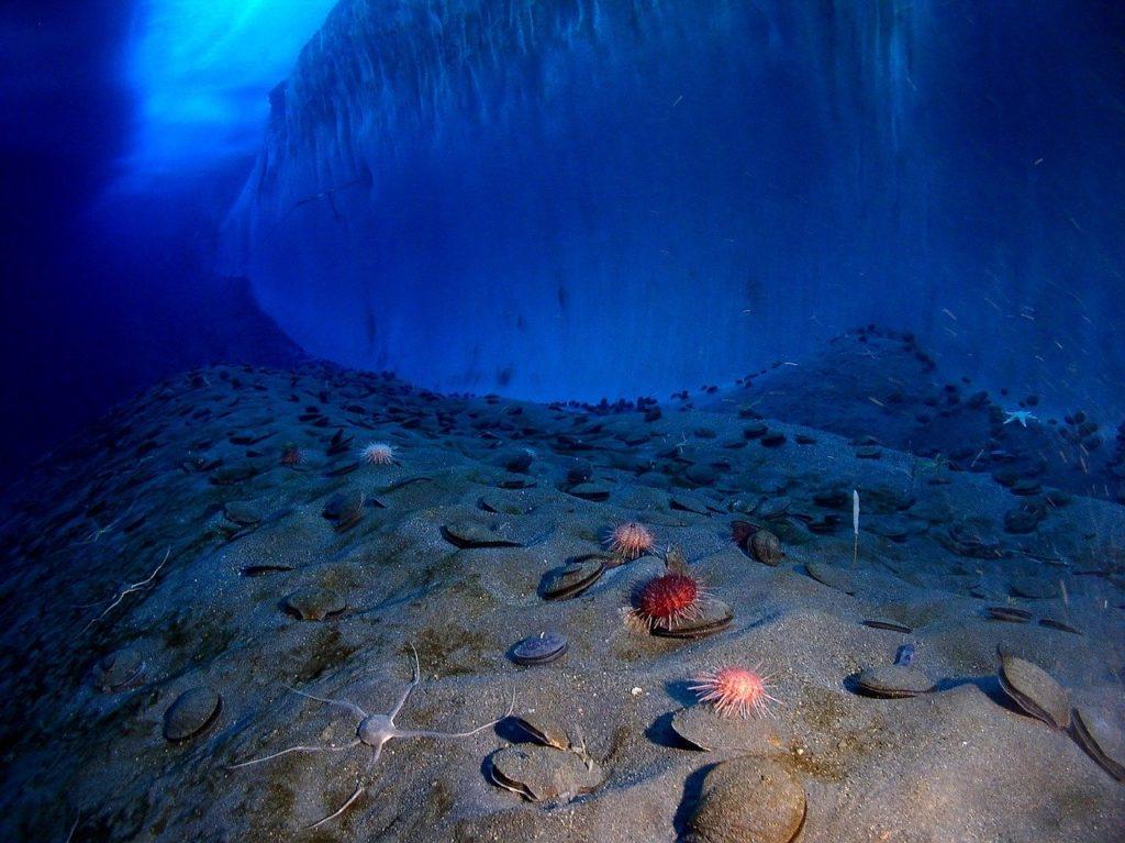 Odwzorowano już prawie 20% dna oceanów. Dokładna mapa pozwoli dokładniej ocenić zmiany klimatu